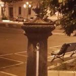 Reggio C.: Pizzimenti(Fi),  mancata comunicazione acqua non potabile