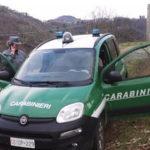 Ladri di pigne nel cosentino, tre arresti dei carabinieri