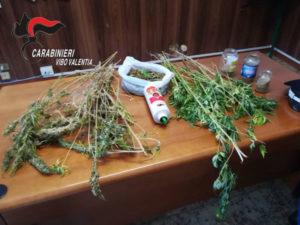 Droga: 120 piante di marijuana dietro casa, un arresto a Gerocarne