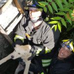 Lamezia: cucciolo di cane recuperato dai Vigili del Fuoco