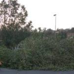 Maltempo: raffiche di vento nel Cosentino, albero su auto in sosta