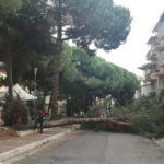 """Lamezia: Gianturco, """"sfiorata tragedia in piazza Garibaldi"""""""