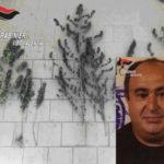 Droga: coltivava canapa indiana, un arresto nel Vibonese