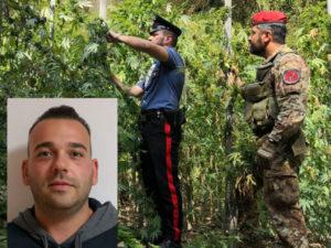 Droga: piantagione nelle campagne di San Procopio, un arresto