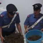 Droga: 2,450 kg di marijuana in casa, arrestato nel Catanzarese