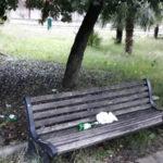 Lamezia: Piccioni parco Lorenzo Scarpino in stato di abbandono