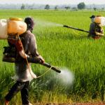 Pesticidi: stop glifosato, Calabria prima regione in campo