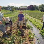 Regione: Psr, 1,5 mln a sostegno dell'agricoltura sociale