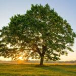 Giornata nazionale degli alberi, incontro a Catanzaro