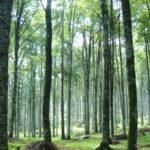 Ambiente: Calabria, pubblicata graduatoria definitiva rimboschimento