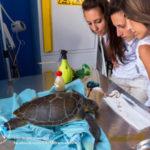 Brancaleone: Oliverio centro recupero tartarughe non chiude