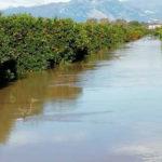 Maltempo: Calabria, in ginocchio il comprensorio delle clementine