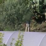 Falso cieco: scoperto nel Vibonese, denunciati anche due medici