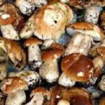 Lamezia: Asp e Polizia Locale sequestrano oltre 50Kg di funghi