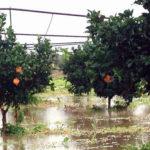 Maltempo: Calabria; agrumeti allagati, fiume fa strage di animali