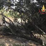 Maltempo: tromba d'aria nel Catanzarese, divelti tetti e alberi