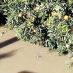 Maltempo: Uci, task force per stima danni esondazione Crati