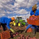 Immigrati: protocollo Intesa lavoro stagionale agricoltura