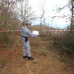 Due arresti per furto di legname nel Cosentino