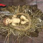 Brucia presepe e ruba bambinello,scoperto da carabinieri nel Vibonese