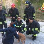 Cani intrappolati in canale salvati dai Vigili del Fuoco a Conflenti
