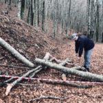 Taglio alberi di faggio in fondo comunale,3 arresti nel Cosentino