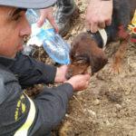 Cane incastrato in una tana, salvato dai vigili del fuoco