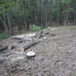Tagliavano legna in Parco Serre, 3 arresti nel Vibonese