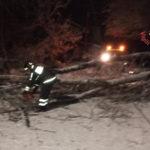 Maltempo: dopo nevicata, alberi tranciano rete Enel nel Catanzarese