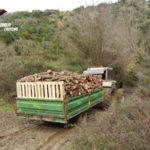 Tre arresti per furto di legname nel Crotonese