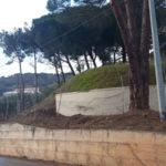 Lamezia: Villella(Mtl) risolto problema alberi pericolanti quartiere Bella