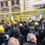 """Agricoltura: Coldiretti presenta a Roma il piano """"salvaolio"""""""