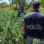 Droga: coltivazione marijuana, 2 arresti della Polizia a Siderno