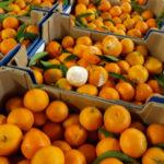 Regione: Battaglia-D'Acri, affrontare la crisi agrumicola
