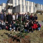 Castrovillari: piantumate oltre 100 piante nell'area del Tribunale
