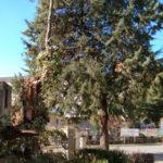 Castrovillari: cade albero ferito un uomo,  comune attiva Coc