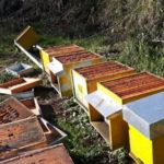 Apicoltura: atto vandalico ai danni di una azienda di Feroleto Antico