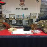 Bracconaggio: controlli carabinieri nel Soveratese, una denuncia