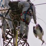 Cicogna bianca uccisa nel suo nido, Lipu atto gravissimo