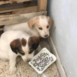 Cuccioli di cane abbandonati nel Reggino, salvati dai cantonieri Anas