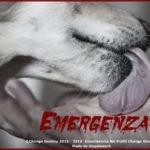 Randagismo: in Calabria è davvero uno Stato di Emergenza!