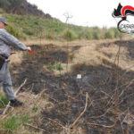 Incendi: appicca rogo nel Cosentino, denunciato un uomo