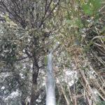 Lamezia: Branca(Lega) fogliame copre Lampioni zona Capizzaglie