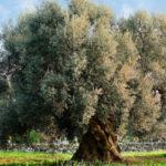Agricoltura: corso gestione chioma Lamezia Terme e Castrovillari