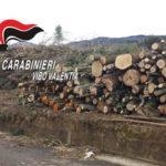 Abbattono alberi di Pino senza autorizzazione, denunciati tre uomini
