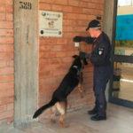 Droga: controlli nelle scuole a Botricello, sequestrate dosi hashish