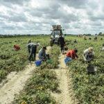 Lavoro nero: controlli nel Reggino, irregolarita' in 3 aziende