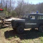 Tagliano decine di alberi nel Catanzarese, due denunce