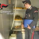 Escrementi di animali accanto a cibo, chiuso locale a Pizzo