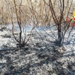 Incendi: in fumo arbusti e macchia mediterranea nel Catanzarese